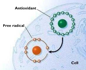Free Radicals and Antioxidants - healthfruit.com